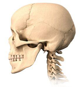 craniosacral therapy skull